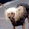 Spiro se je udeležil tudi pasje modne revije, kjer so zbirali sredstva za zavržene kužke v Mariboru.