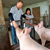 Erika Damijanu pomaga skrbeti tudi za prašiče.