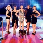 Med nastopajočimi so tudi vrhunske plesalke, ki trenutno predstavljajo projekt High Heels High Hopes pod okriljem Andreje Vakselj. (foto: Dejan Nikolič, produkcija Bakster)