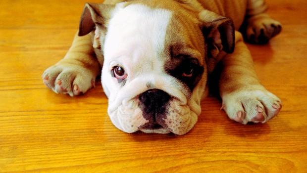 12 težav, ki jih razumejo le lastniki psov (foto: profimedia)