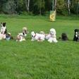 Zavod PET vabi na izobraževanje za terapevtske pse in njihove vodnike