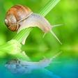 3 vrtni škodljivci, ki se jih lahko učinkovito znebimo na ekološki način