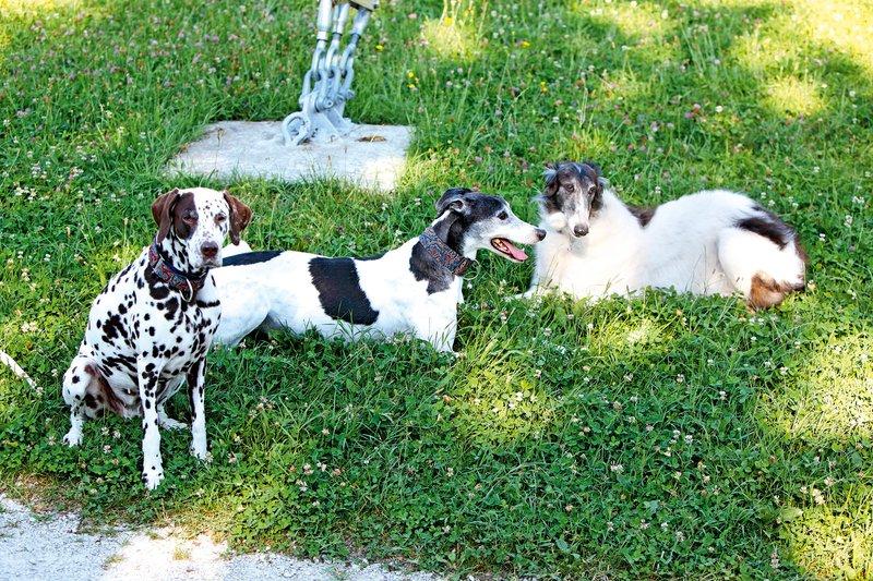 V zadnjih letih so njun dom obogatili trije psi, hrt Viktor in dalmatinka Iuno sta žal že podlegla bolezni, 12-letna Olga pa je še vedno njuna ljubljenka.