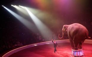Nizozemska prepovedala uporabo živali v cirkusih