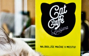 Tina Piskač Sedej o tem, kako je nastala mačja kavarna