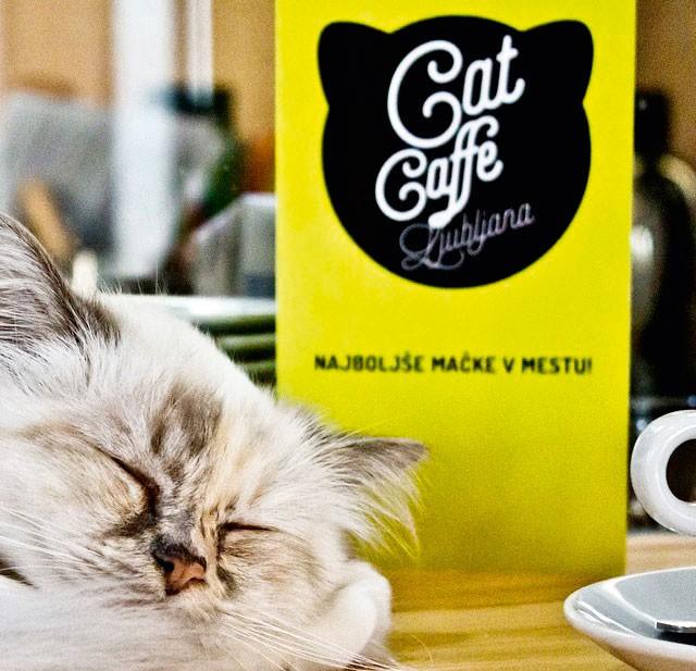Tina Piskač Sedej o tem, kako je nastala mačja kavarna (foto: osebni arhiv)