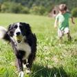 Na vašega psa prežijo klopi in bolhe! Zaščitite ga pred prežečo nevarnostjo!