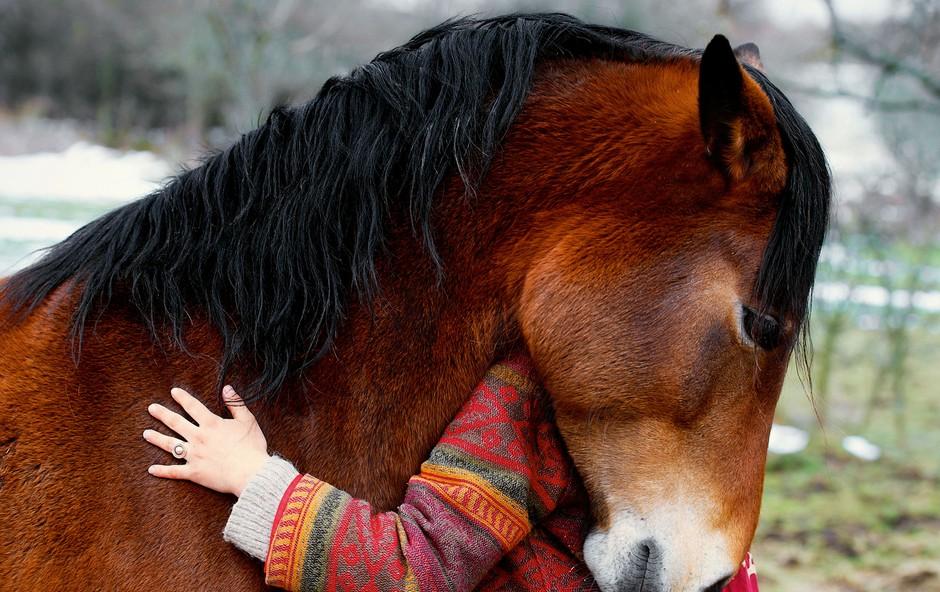 Brežiško sodišče zaradi mučenja konj lastnika obsodilo na  8 mesecev zapora! (foto: Mina Jereb, osebni arhiv in Shutterstock)