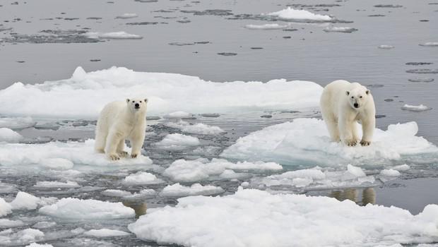 Na Arktiki beležijo rekordno visoke temperature, led pa se neusmiljeno topi! (foto: profimedia)