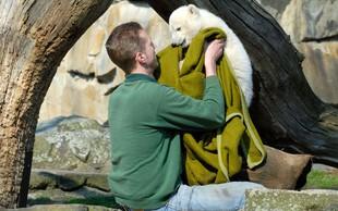 V berlinskem živalskem vrtu so navdušeni nad Knutom - mladičkom polarnega medveda!