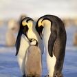 Iz nemškega živalskega vrta ukradli pingvina