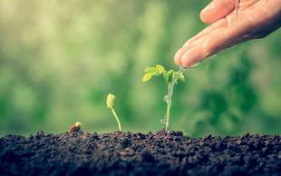 Marčevska opravila na vrtu: Sejte in sadite