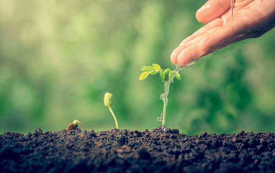 Marčevska opravila na vrtu: Sejte in sadite (foto: Profimedia, Shutterstock)