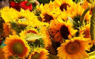 Spomladanski sejmi Flora, Poroka, Altermed in čebelarji že naslednji vikend!