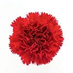 Dan žena: Šopek cvetja izkazuje naklonjenost (foto: Shutterstock)