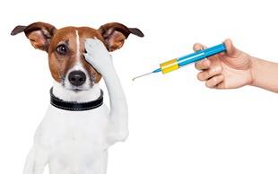 Živalsko carstvo: Preverite datum obveznega cepljenja proti steklini