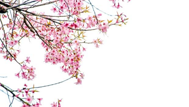 Sajenje sadnega drevja je eno izmed prvih opravil v prebujajoči se pomladi (foto: shutterstock)