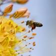 Občina, organizacije in posamezniki za 'Pomagajmo čebelici – Ocvetličimo mesto'