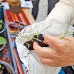 Edino načelo - sadika za sadiko. (foto: arhiv Zelemenjave)