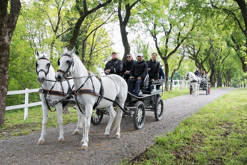 Predstavniki podjetja New Silk Road so bili navdušeni nad vožnjo s kočijo