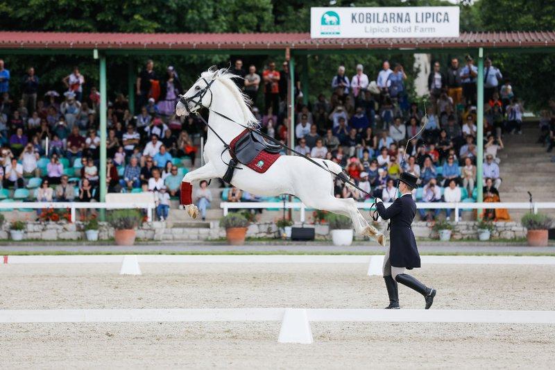 Gala predstava plemenitih lipicancev in konjeniških gostov