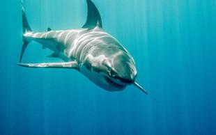 Žrelo v živo: avstralskemu ribiču je v čoln skočil beli morski pes!