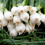 Vrtnarjenje: Učinkovit razpored na gredah (foto: Shutterstock)