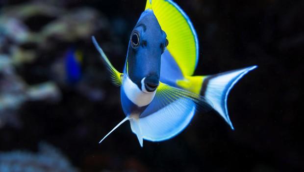Rekordne temperature Ligurskega morja že privabljajo tropske ribe! (foto: profimedia)