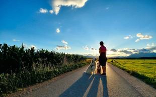 V Sloveniji posvojili več kot 400 psov iz Bosne