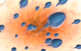 Raziskava: V zadnjih 40 letih pri moških na Zahodu število semenčic upadlo za polovico
