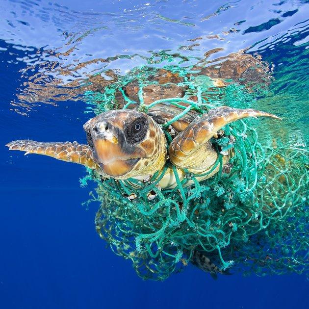 © Francis Pérez; Morska želva v pasti