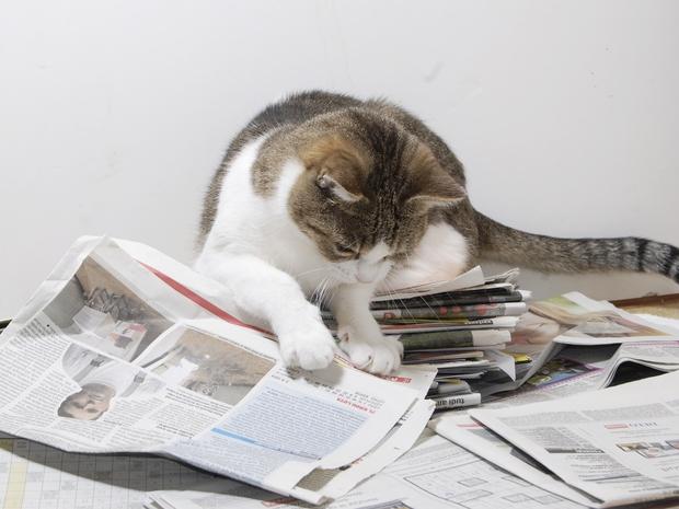Kako tona starega papirja pomaga živalim? (foto: DZZZLj)