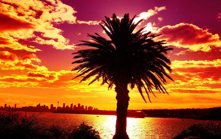Sydney naj bi se leta 2050 pregreval pri 50 stopinjah Celzija (foto: profimedia)