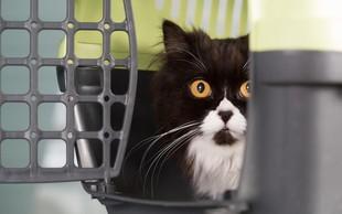 10 najpomembnejših nasvetov za prevoz vaše mačke v veterinarsko ambulanto