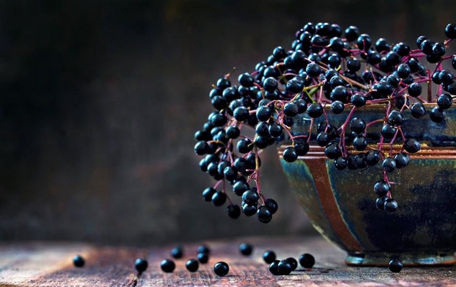 Črni bezeg - energetsko predstavlja celovitost (foto: Shutterstock)