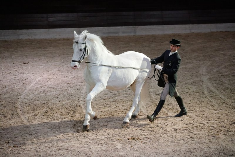 Kobilarna Lipica