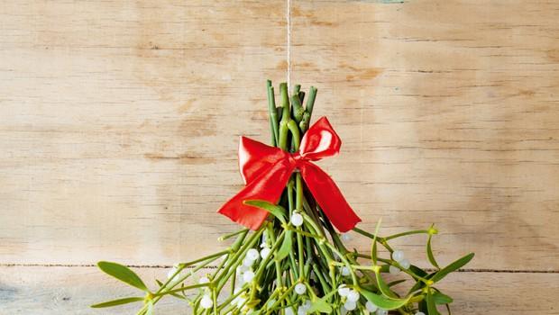 Bela omela  - za druide je veljala za sveto rastlino (foto: Shutterstock)