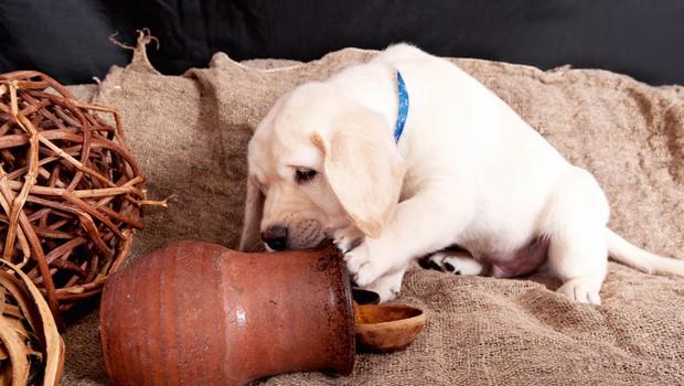 Zdravilna glina - eliksir za hišne ljubljenčke! (foto: Shutterstock)