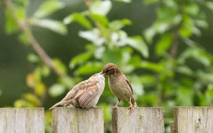 Ptički se ženijo, god sv. Gregorja pa napoveduje pomlad!