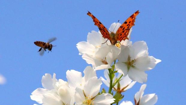 V Nemčiji načrtujejo nacionalno štetje žuželk (foto: profimedia)