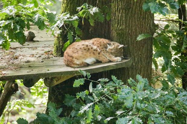 Teden risov v ZOO Ljubljana (foto: Zoo Press)