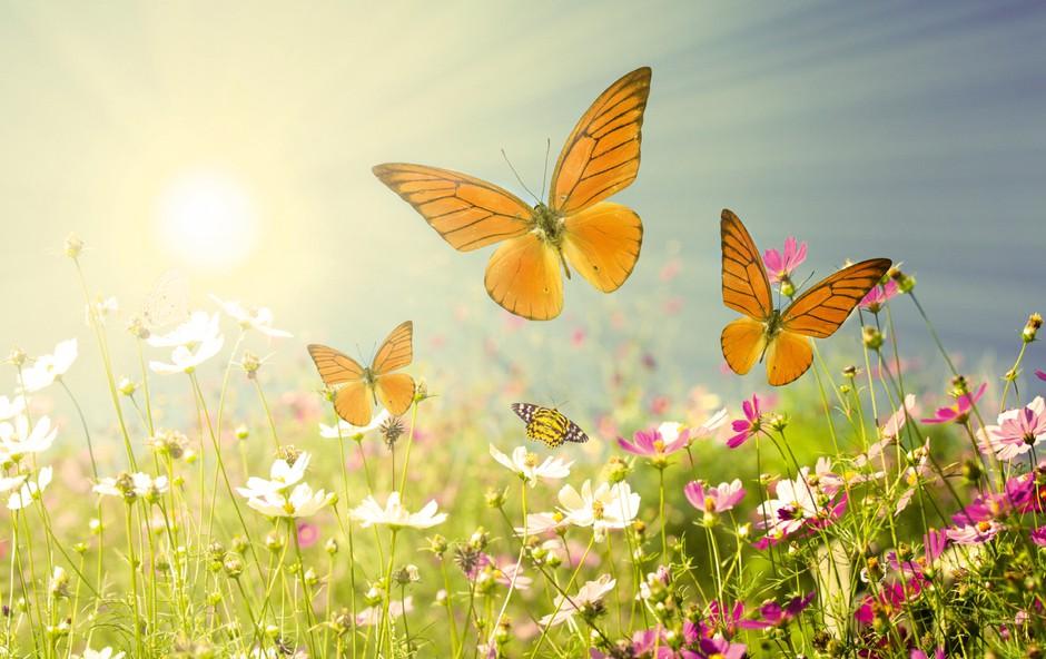 Mesec junij oziroma rožnik: Mesec ljubezni in porok (foto: Shutterstock)