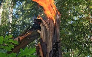 Na Švedskem se borijo proti številnim gozdnim požarom