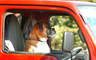 Koper: Švicarko zaradi neprimernega obnašanja in ravnanja s psi kaznovali z globo