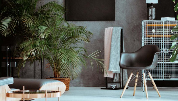 Sobne palme: Pridih tropskih krajev (foto: Shutterstock)