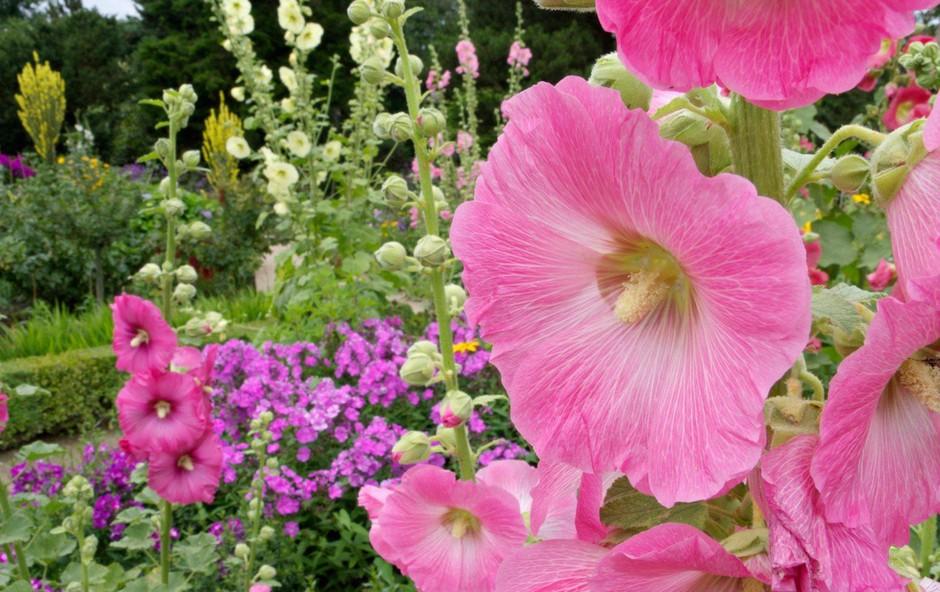 Poletna zeliščna apotekarna: Spoznajte koristne rastline! (foto: Profimedia)