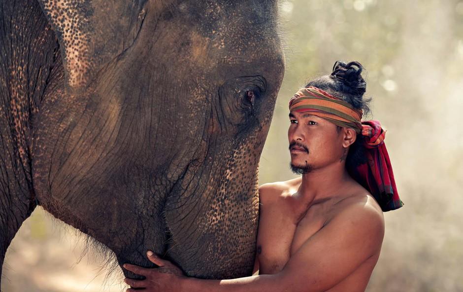 """Slonja """"svetišča"""" in opozorila za popotnike, ki bi jih hoteli obiskati (foto: Shutterstock)"""