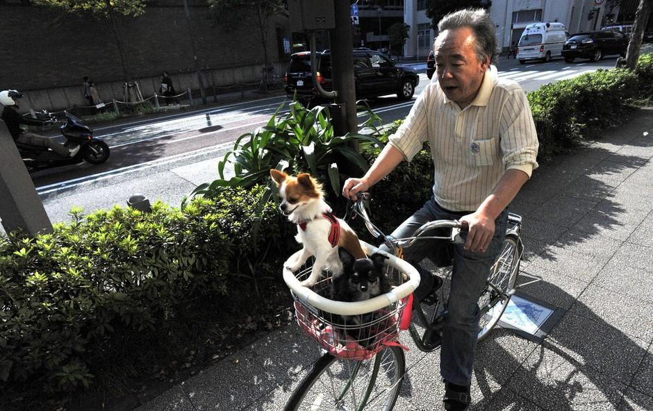 Japonski rekordi: Imajo že skoraj 70.000 stoletnikov! (foto: Profimedia)