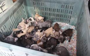Pomurski policisti odkrili Italijana, ki sta nezakonito prevažala 107 pasjih mladičkov!
