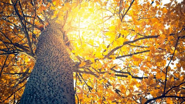 Magična moč hrasta (foto: Shutterstock)